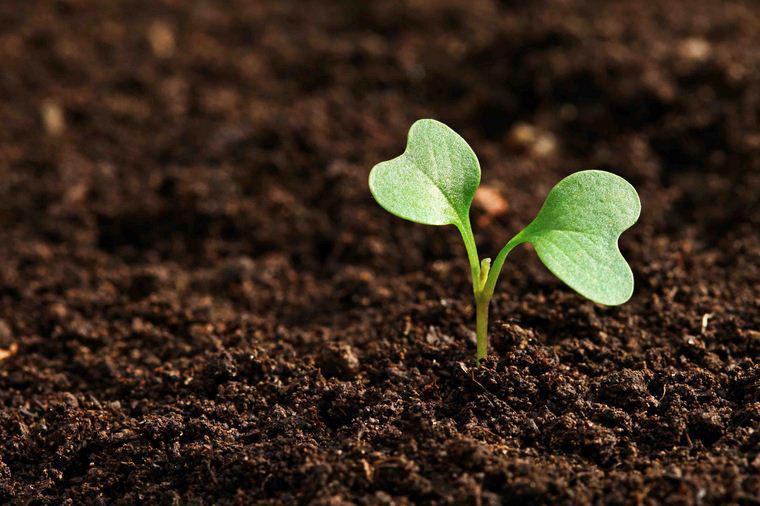 БиоГрунт - доставка растительных удобрений  по Москве и области