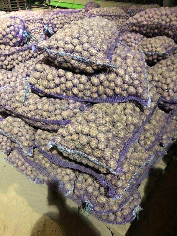 Картофель семенной, сорт Гала, от производителя